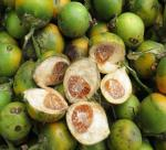 Areca nuts and unexpected uses